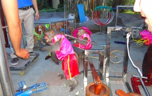 Monkey & dog performers